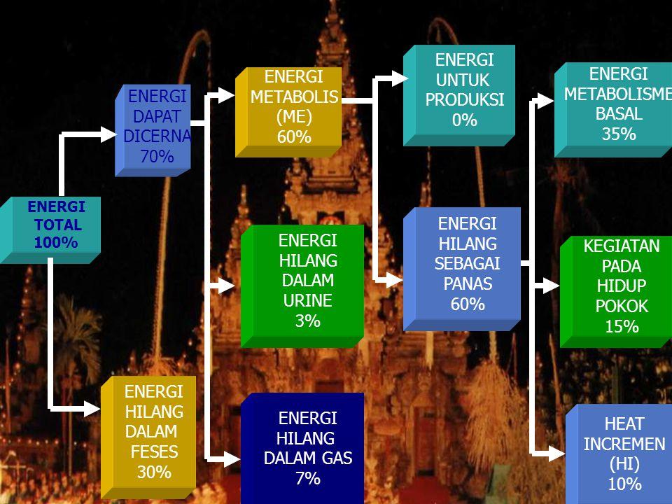 ENERGI TOTAL 100% ENERGI DAPAT DICERNA 70% ENERGI HILANG DALAM FESES 30% ENERGI METABOLIS (ME) 60% ENERGI UNTUK PRODUKSI 0% ENERGI HILANG DALAM GAS 7% ENERGI HILANG DALAM URINE 3% ENERGI HILANG SEBAGAI PANAS 60% ENERGI METABOLISME BASAL 35% KEGIATAN PADA HIDUP POKOK 15% HEAT INCREMEN (HI) 10%