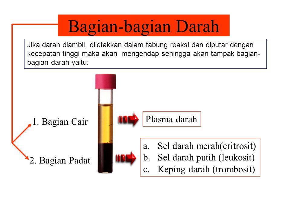 Fungsi Darah Utama 1.Pengedar sari-sari makanan dan oksigen ke seluruh tubuh 2.Mengangkut bahan-bahan sisa dari seluruh tubuh untuk dibuang melalui ginjal, kulit dan paru-paru Darah mengedarkan oksigen ke seluruh tubuh untuk membakar sari-sari makanan.