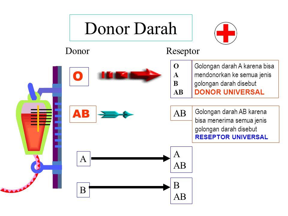 KEPING DARAH Peranan/Guna : Menutup luka (Trombosit)
