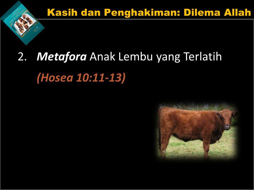 Kasih dan Penghakiman: Dilema Allah 2. Metafora Anak Lembu yang Terlatih (Hosea 10:11-13)