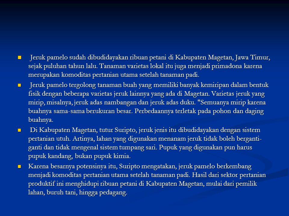 Jeruk pamelo sudah dibudidayakan ribuan petani di Kabupaten Magetan, Jawa Timur, sejak puluhan tahun lalu. Tanaman varietas lokal itu juga menjadi pri