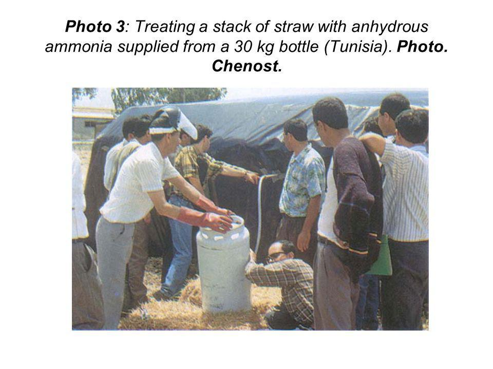 Photo 3: Treating a stack of straw with anhydrous ammonia supplied from a 30 kg bottle (Tunisia). Photo. Chenost.