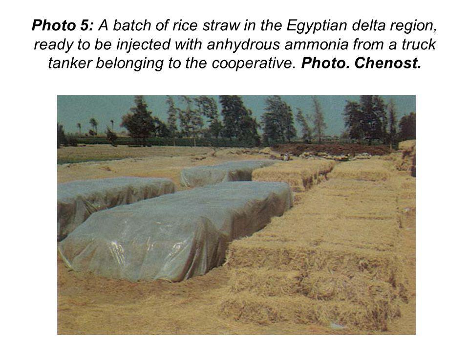 Photo 5: A batch of rice straw in the Egyptian delta region, ready to be injected with anhydrous ammonia from a truck tanker belonging to the cooperative.