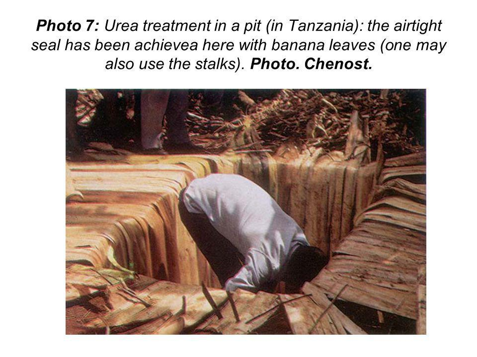 Photo 7: Urea treatment in a pit (in Tanzania): the airtight seal has been achievea here with banana leaves (one may also use the stalks).