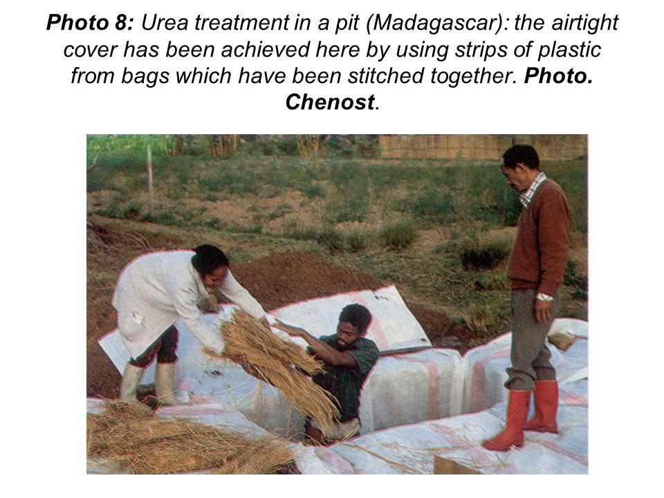 Photo 8: Urea treatment in a pit (Madagascar): the airtight cover has been achieved here by using strips of plastic from bags which have been stitched