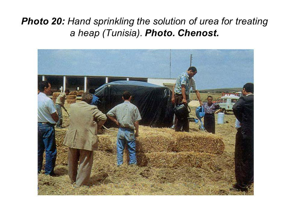 Photo 20: Hand sprinkling the solution of urea for treating a heap (Tunisia). Photo. Chenost.