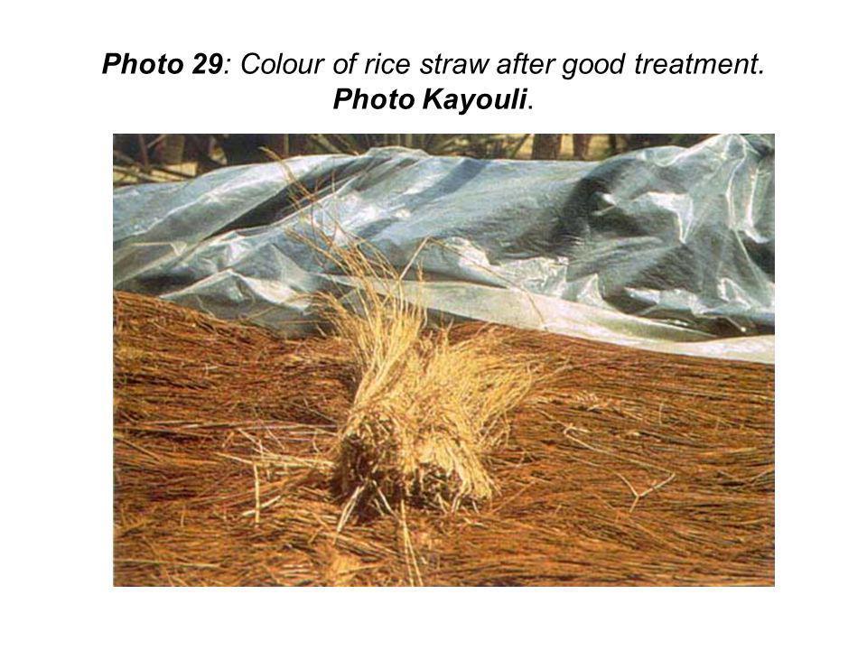 Photo 29: Colour of rice straw after good treatment. Photo Kayouli.