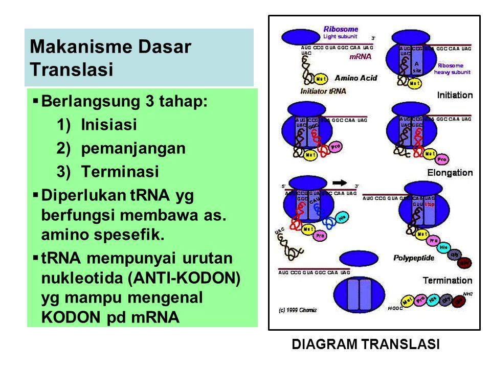 Makanisme Dasar Translasi  Berlangsung 3 tahap: 1)Inisiasi 2)pemanjangan 3)Terminasi  Diperlukan tRNA yg berfungsi membawa as.