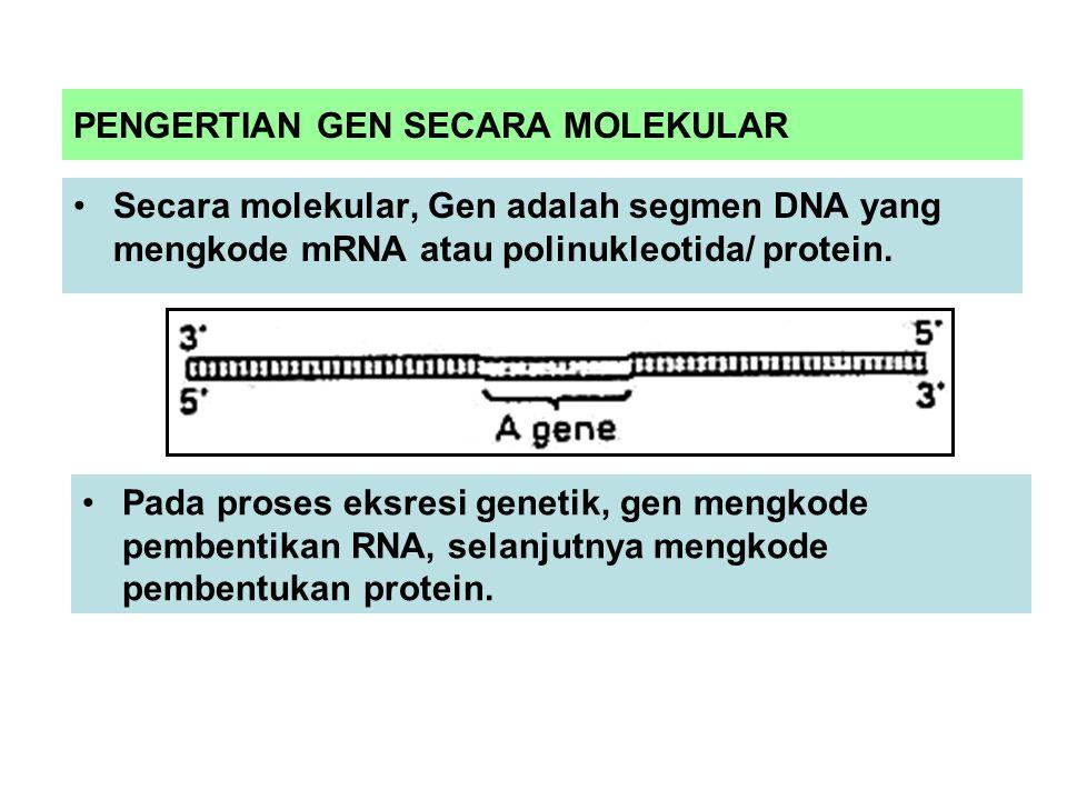 PENGERTIAN GEN SECARA MOLEKULAR Secara molekular, Gen adalah segmen DNA yang mengkode mRNA atau polinukleotida/ protein.