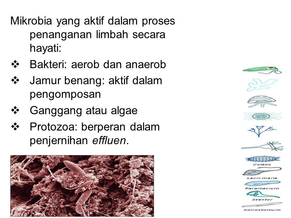 Mikrobia yang aktif dalam proses penanganan limbah secara hayati:  Bakteri: aerob dan anaerob  Jamur benang: aktif dalam pengomposan  Ganggang atau