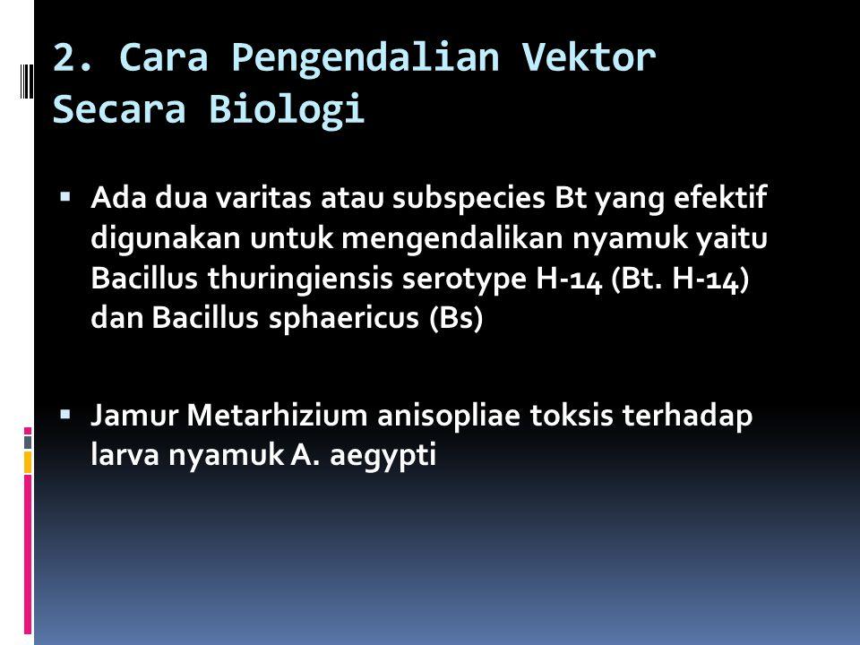 2. Cara Pengendalian Vektor Secara Biologi  Ada dua varitas atau subspecies Bt yang efektif digunakan untuk mengendalikan nyamuk yaitu Bacillus thuri