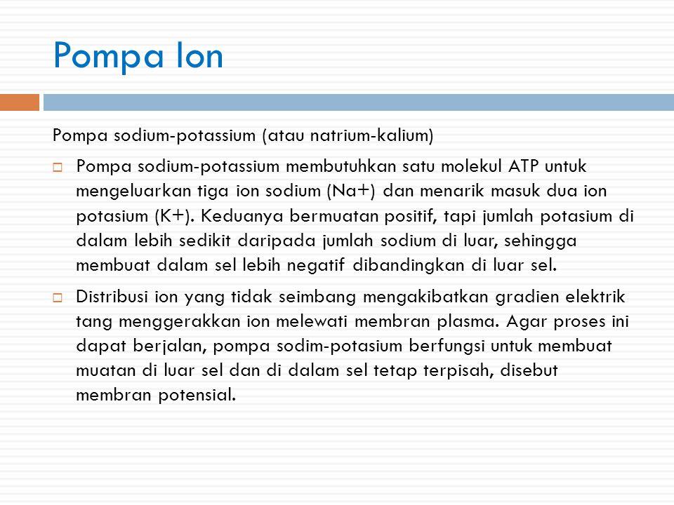 Pompa Ion Pompa sodium-potassium (atau natrium-kalium)  Pompa sodium-potassium membutuhkan satu molekul ATP untuk mengeluarkan tiga ion sodium (Na+) dan menarik masuk dua ion potasium (K+).