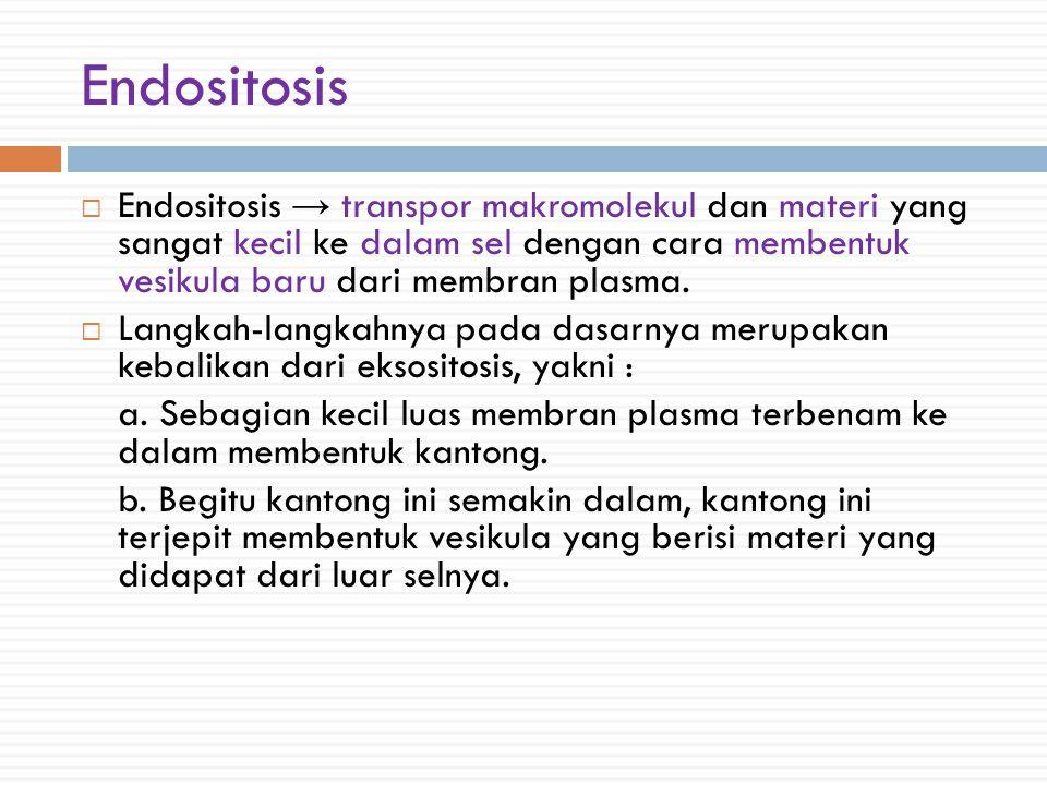 Endositosis  Endositosis → transpor makromolekul dan materi yang sangat kecil ke dalam sel dengan cara membentuk vesikula baru dari membran plasma.