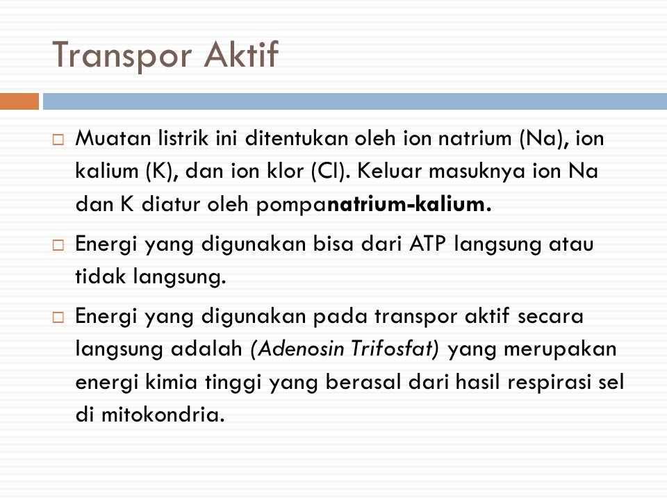 Transpor Aktif  Muatan listrik ini ditentukan oleh ion natrium (Na), ion kalium (K), dan ion klor (CI).