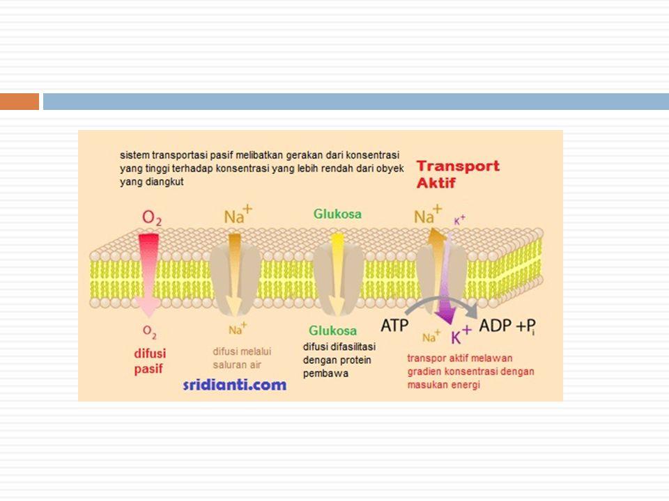 Jenis-jenis Endositosis 1.