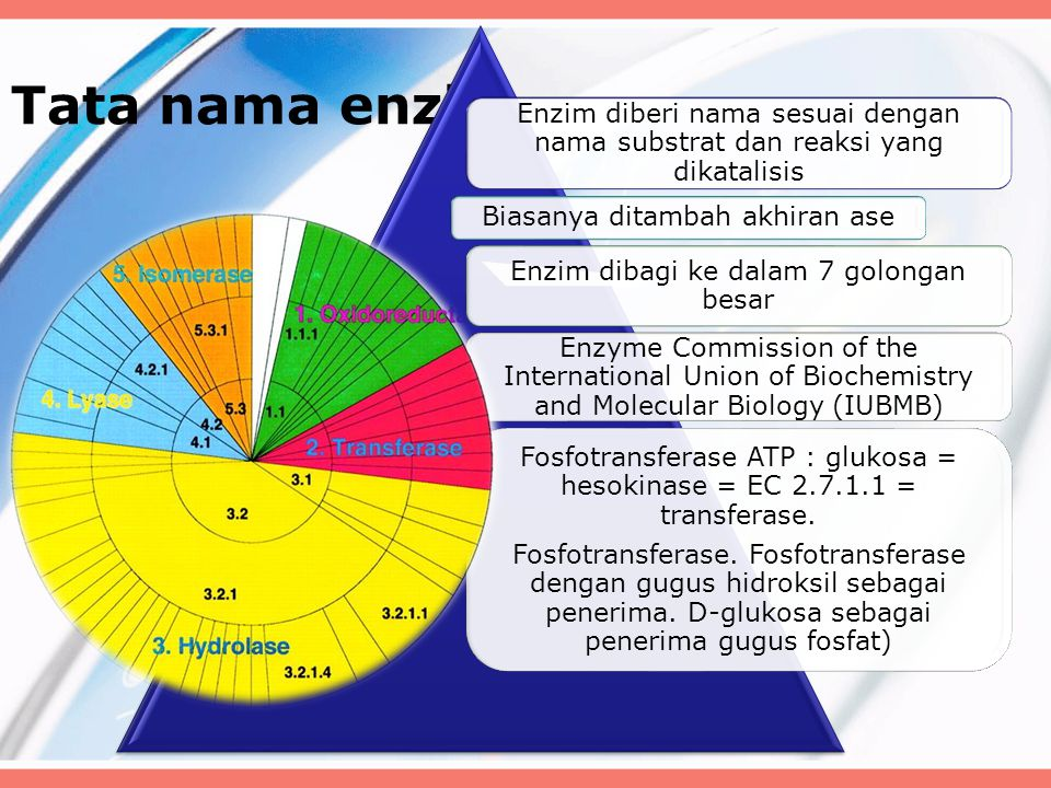 Tata nama enzim Enzim diberi nama sesuai dengan nama substrat dan reaksi yang dikatalisis Biasanya ditambah akhiran ase Enzim dibagi ke dalam 7 golongan besar Enzyme Commission of the International Union of Biochemistry and Molecular Biology (IUBMB) Fosfotransferase ATP : glukosa = hesokinase = EC 2.7.1.1 = transferase.