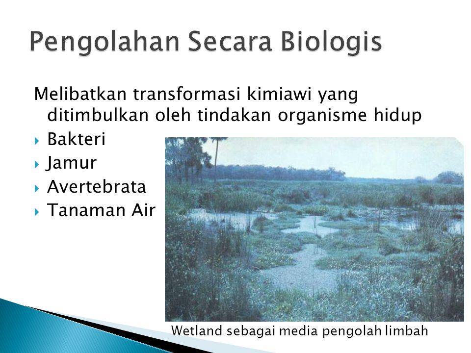 Melibatkan transformasi kimiawi yang ditimbulkan oleh tindakan organisme hidup  Bakteri  Jamur  Avertebrata  Tanaman Air Wetland sebagai media pen