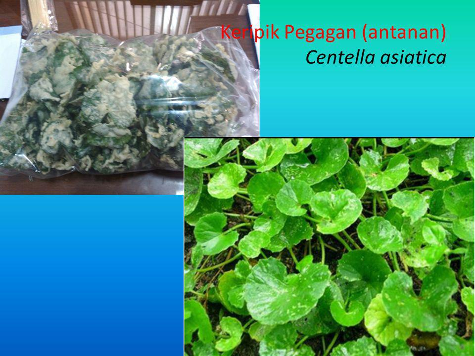 Keripik Pegagan (antanan) Centella asiatica