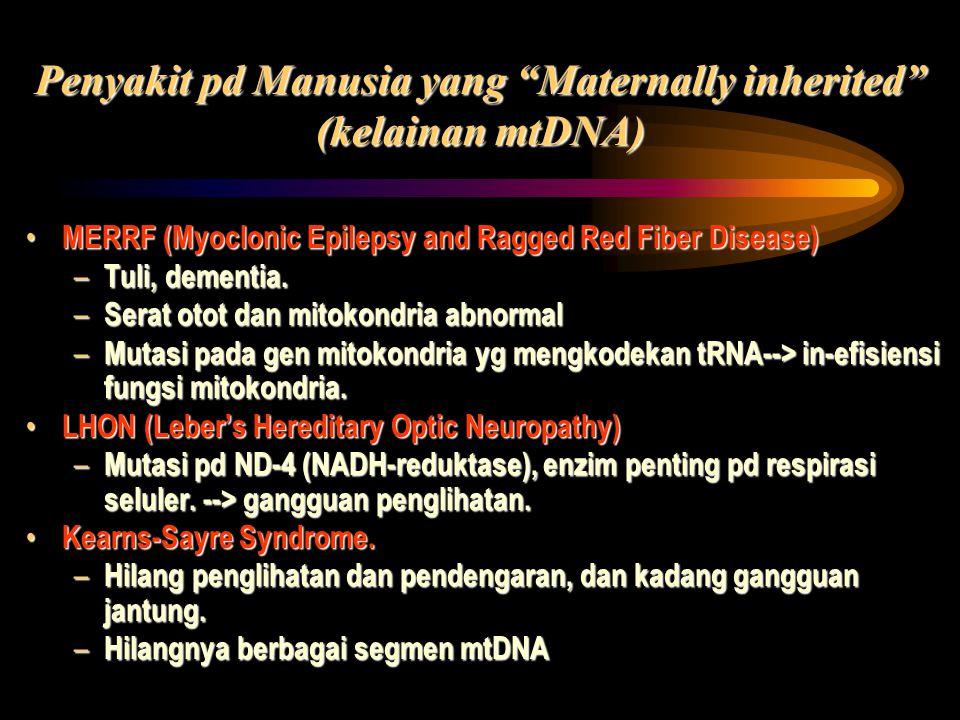 "Penyakit pd Manusia yang ""Maternally inherited"" (kelainan mtDNA) MERRF (Myoclonic Epilepsy and Ragged Red Fiber Disease) MERRF (Myoclonic Epilepsy and"