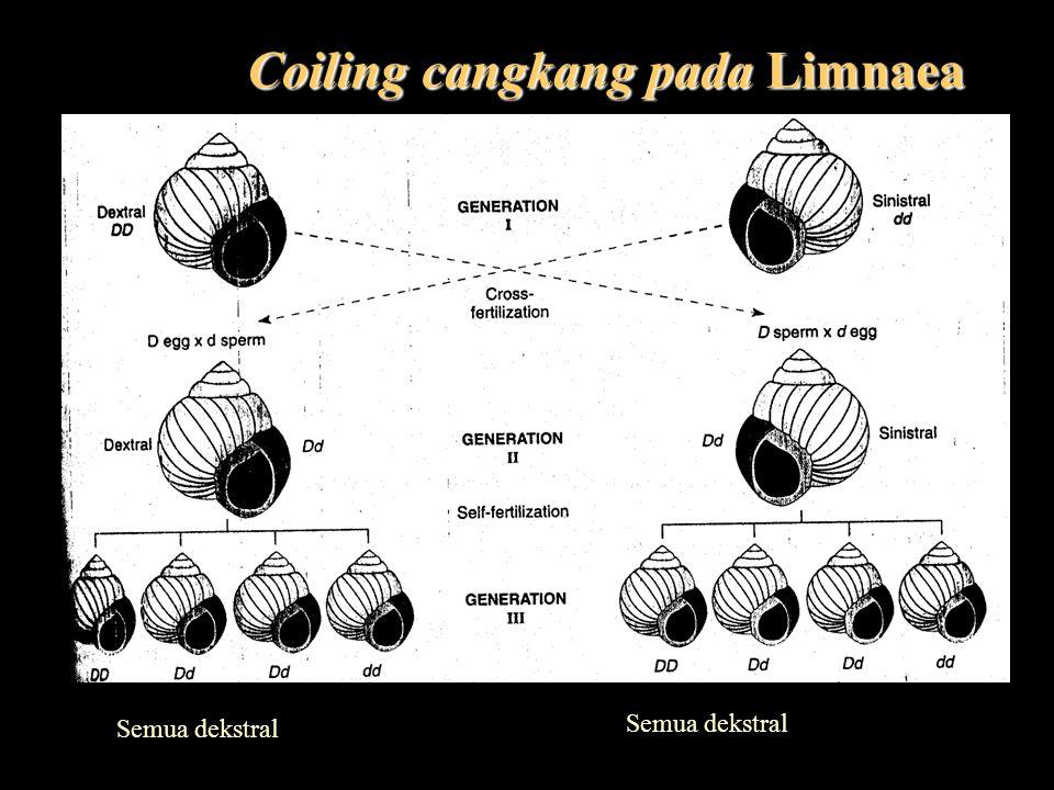 Coiling cangkang pada Limnaea Semua dekstral