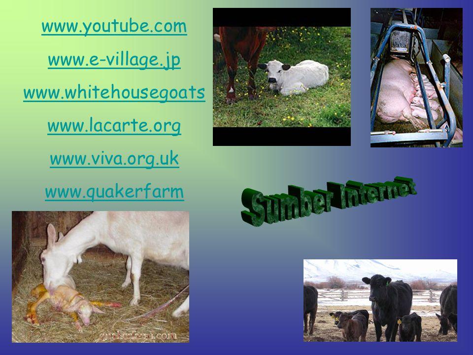 www.youtube.com www.e-village.jp www.whitehousegoats www.lacarte.org www.viva.org.uk www.quakerfarm