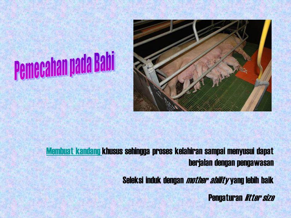 Tingkah Laku Setelah Kelahiran  Cara Meyusui PENGAMATAN Sapi, domba & kambing: Induk berusaha membatu anaknya untuk menyusu Babi: Induk membiarkan anaknya untuk mencari punting sendiri