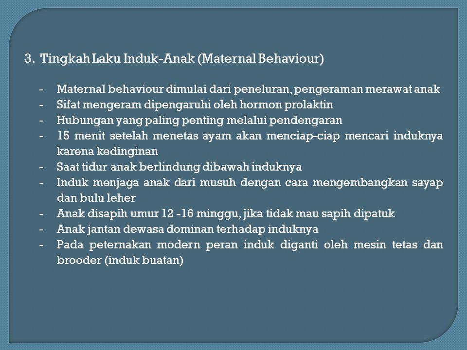 3. Tingkah Laku Induk-Anak (Maternal Behaviour) -Maternal behaviour dimulai dari peneluran, pengeraman merawat anak -Sifat mengeram dipengaruhi oleh h