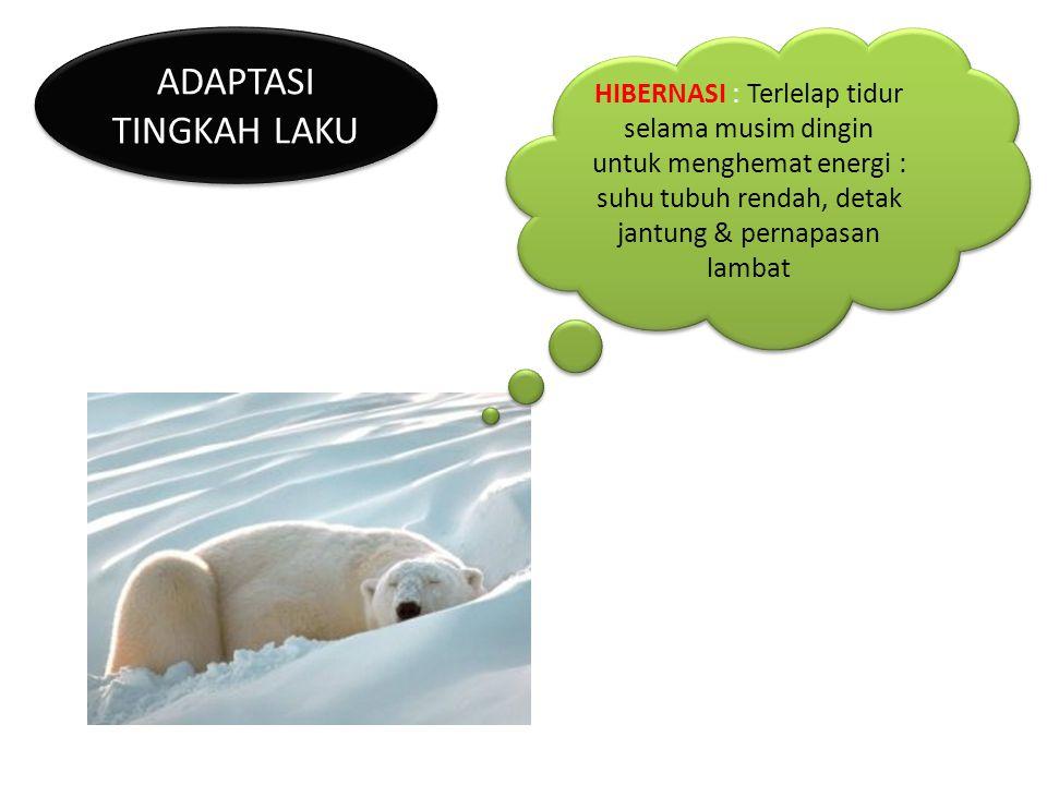 ADAPTASI TINGKAH LAKU HIBERNASI : Terlelap tidur selama musim dingin untuk menghemat energi : suhu tubuh rendah, detak jantung & pernapasan lambat