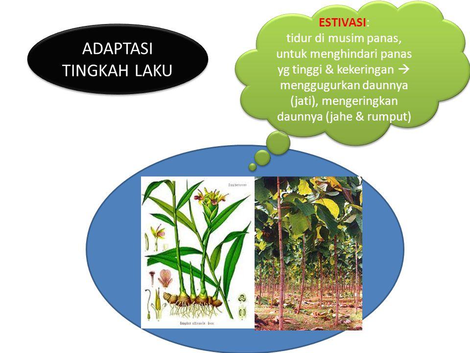 TEORI EVOLUSI DALAM Buku : The Origin Of species (Asal- Usul Jenis-Jenis Hewan ).