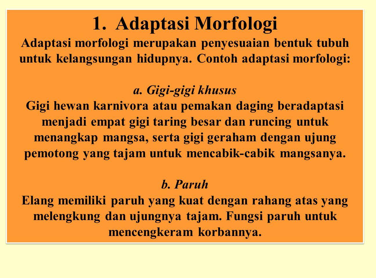 1. Adaptasi Morfologi Adaptasi morfologi merupakan penyesuaian bentuk tubuh untuk kelangsungan hidupnya. Contoh adaptasi morfologi: a. Gigi-gigi khusu