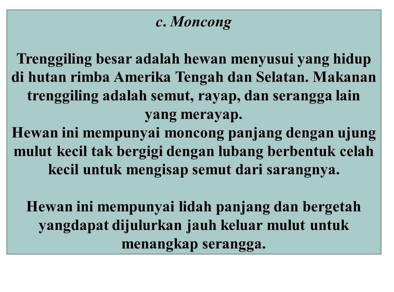 c. Moncong Trenggiling besar adalah hewan menyusui yang hidup di hutan rimba Amerika Tengah dan Selatan. Makanan trenggiling adalah semut, rayap, dan