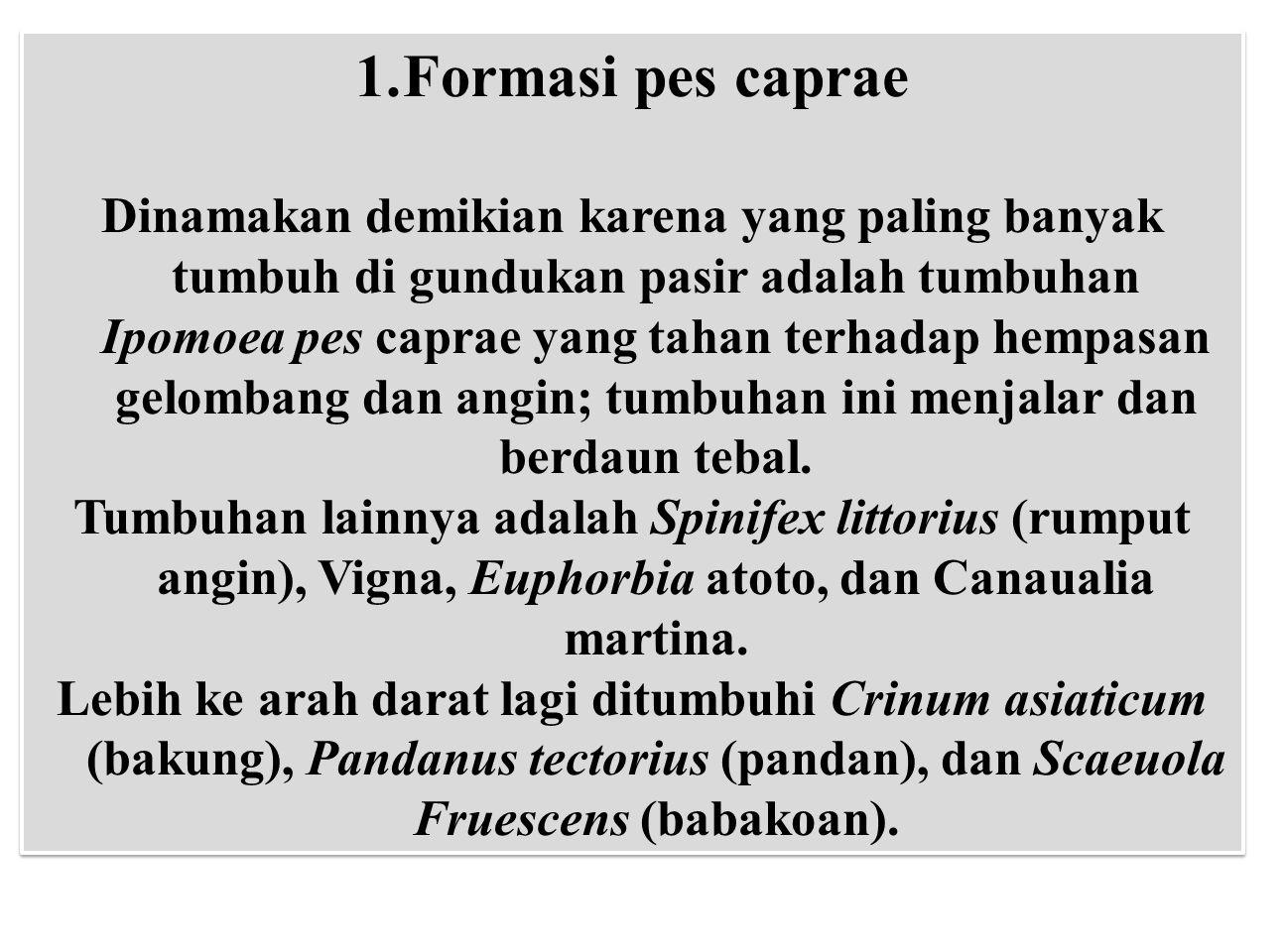 1.Formasi pes caprae Dinamakan demikian karena yang paling banyak tumbuh di gundukan pasir adalah tumbuhan Ipomoea pes caprae yang tahan terhadap hemp