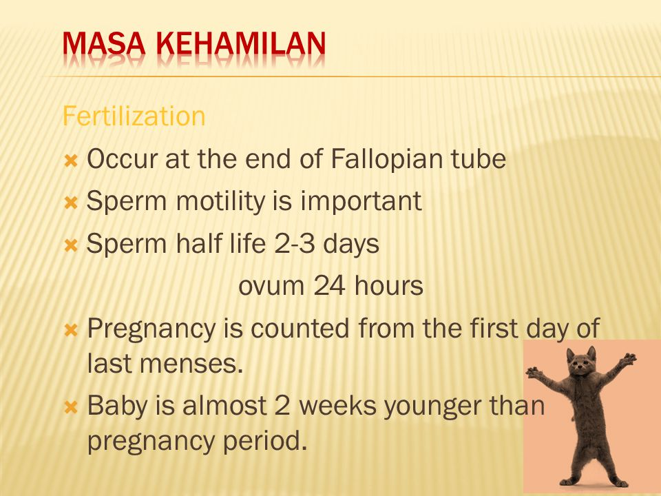 Fertilization  Occur at the end of Fallopian tube  Sperm motility is important  Sperm half life 2-3 days ovum 24 hours  Pregnancy is counted from