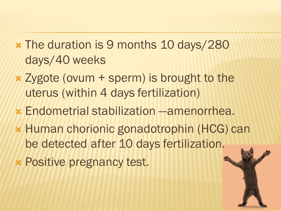  The duration is 9 months 10 days/280 days/40 weeks  Zygote (ovum + sperm) is brought to the uterus (within 4 days fertilization)  Endometrial stabilization —amenorrhea.