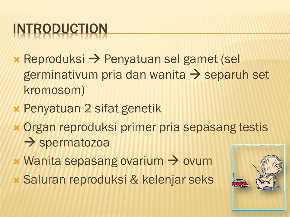  Reproduksi  Penyatuan sel gamet (sel germinativum pria dan wanita  separuh set kromosom)  Penyatuan 2 sifat genetik  Organ reproduksi primer pri