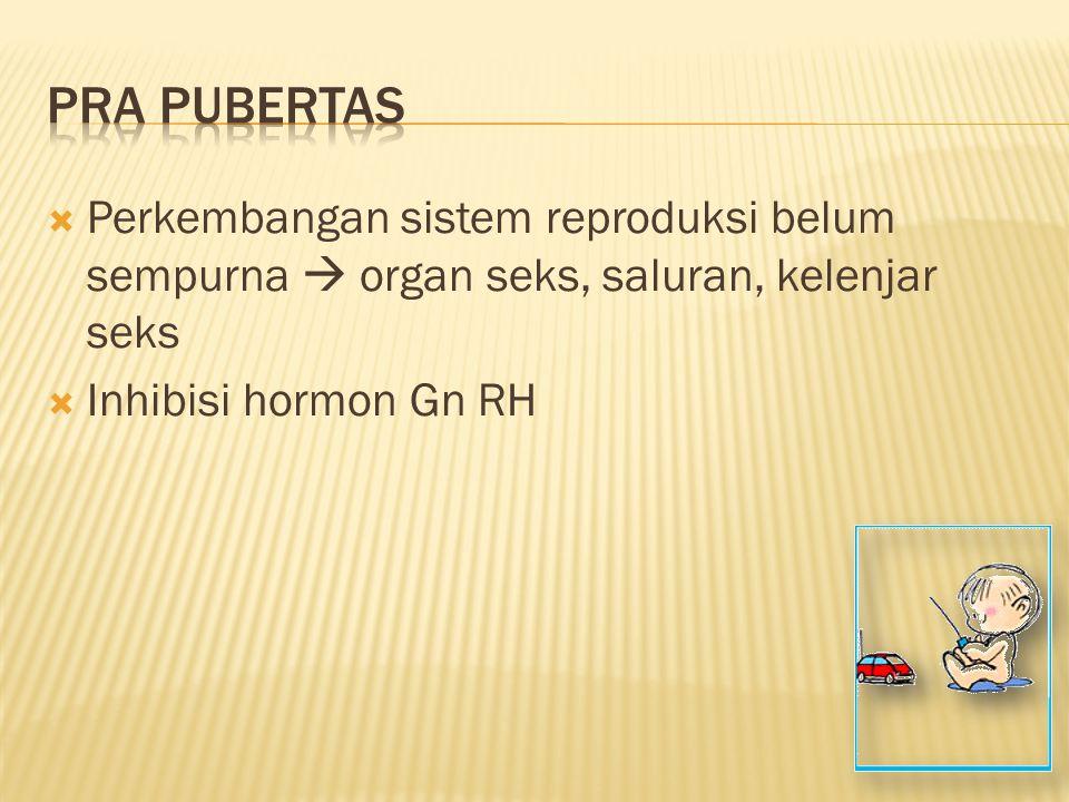  Perkembangan sistem reproduksi belum sempurna  organ seks, saluran, kelenjar seks  Inhibisi hormon Gn RH
