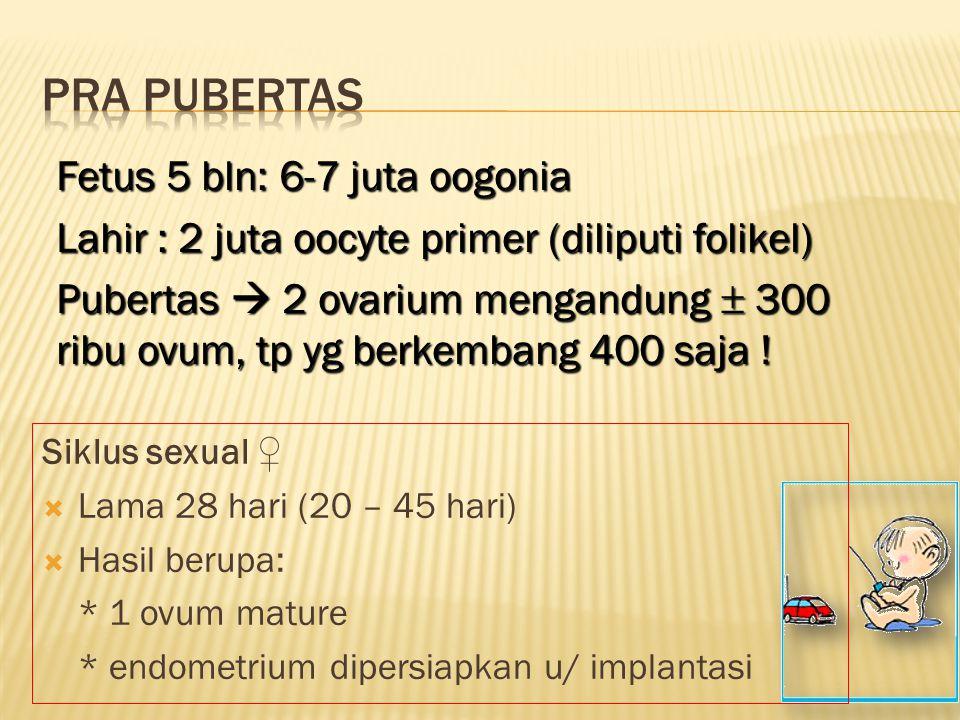 Siklus sexual ♀  Lama 28 hari (20 – 45 hari)  Hasil berupa: * 1 ovum mature * endometrium dipersiapkan u/ implantasi Fetus 5 bln: 6-7 juta oogonia L
