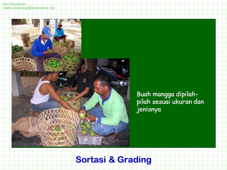Kawi Boedisetio telebiro.bandung0@clubmember.org Buah mangga dipilah- pilah sesuai ukuran dan jenisnya Sortasi & Grading