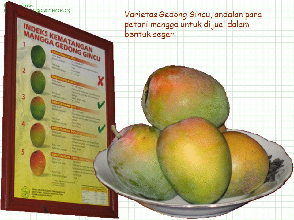 Kawi Boedisetio telebiro.bandung0@clubmember.org Varietas Gedong Gincu, andalan para petani mangga untuk dijual dalam bentuk segar.