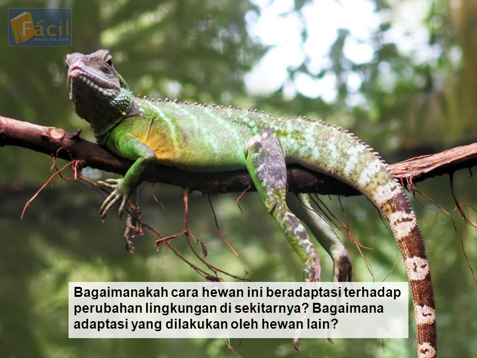 Bagaimanakah cara hewan ini beradaptasi terhadap perubahan lingkungan di sekitarnya? Bagaimana adaptasi yang dilakukan oleh hewan lain?