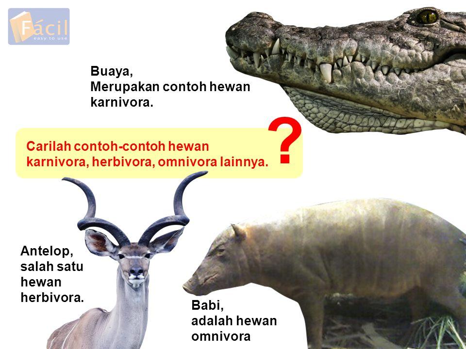 Buaya, Merupakan contoh hewan karnivora. Babi, adalah hewan omnivora Antelop, salah satu hewan herbivora. Carilah contoh-contoh hewan karnivora, herbi