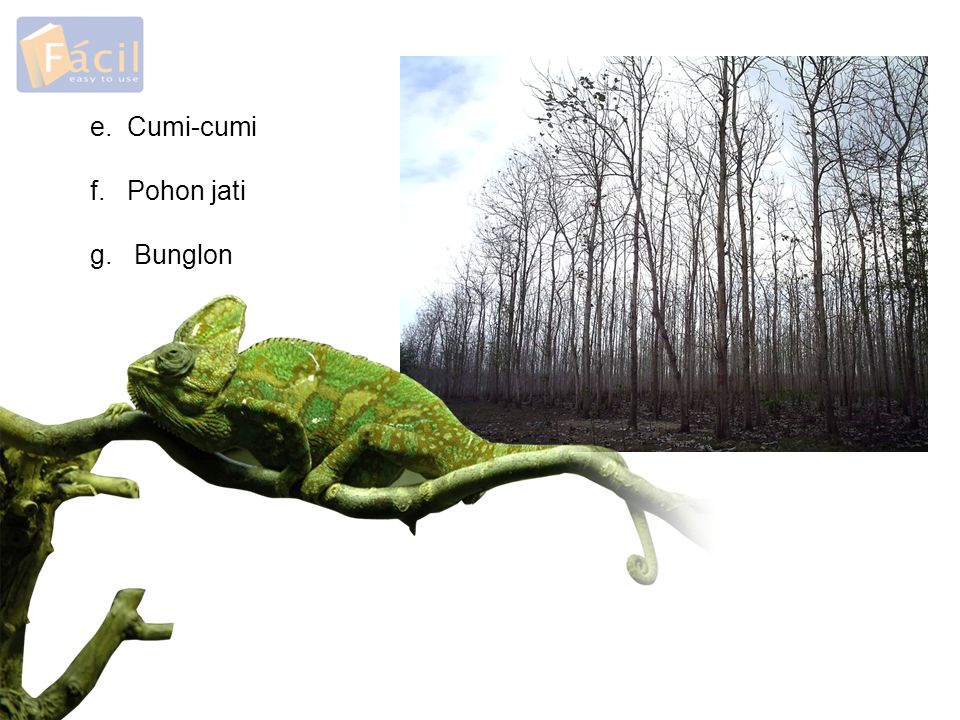 g. Bunglon f. Pohon jati e. Cumi-cumi