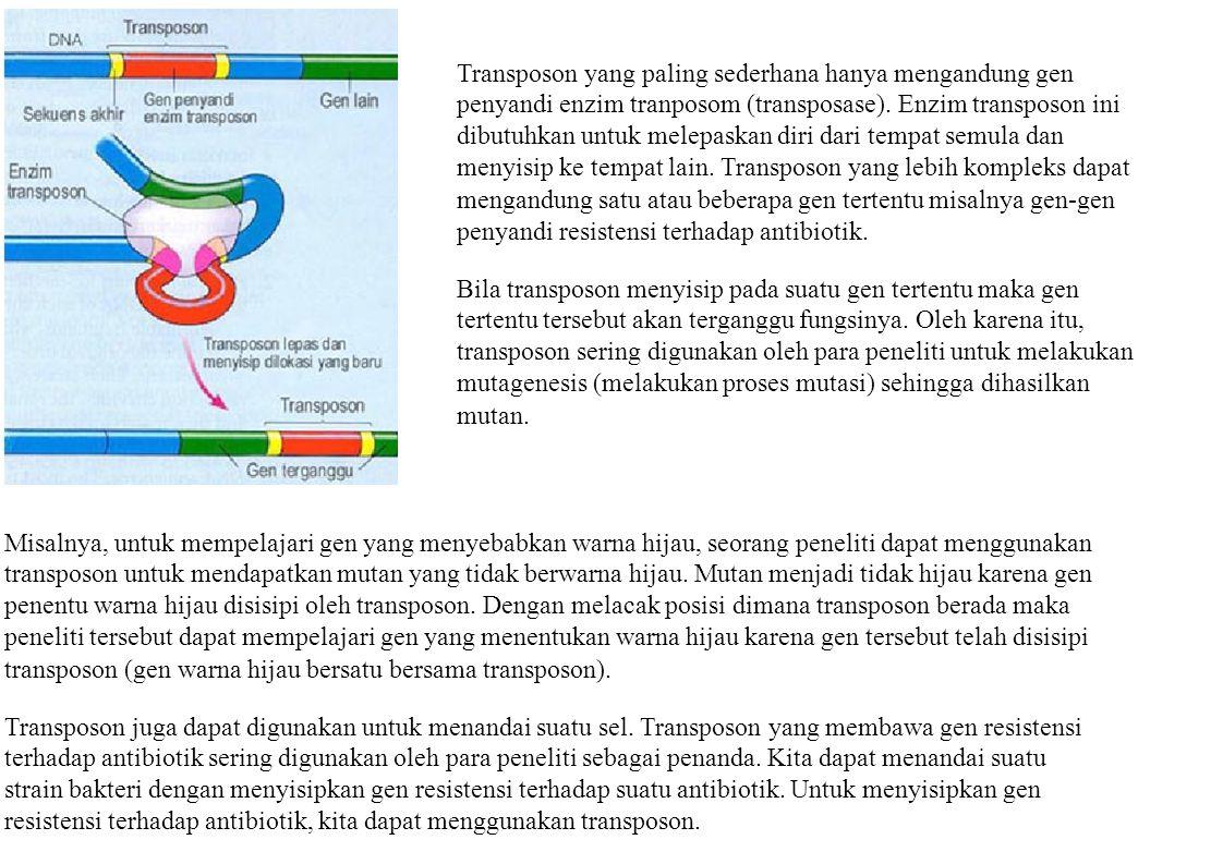 Transposon yang paling sederhana hanya mengandung gen penyandi enzim tranposom (transposase). Enzim transposon ini dibutuhkan untuk melepaskan diri da