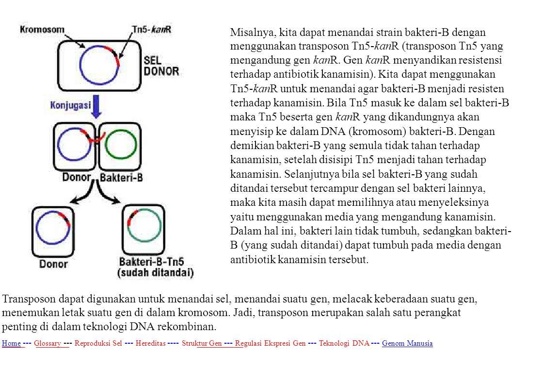 Misalnya, kita dapat menandai strain bakteri-B dengan menggunakan transposon Tn5-kanR (transposon Tn5 yang mengandung gen kanR. Gen kanR menyandikan r