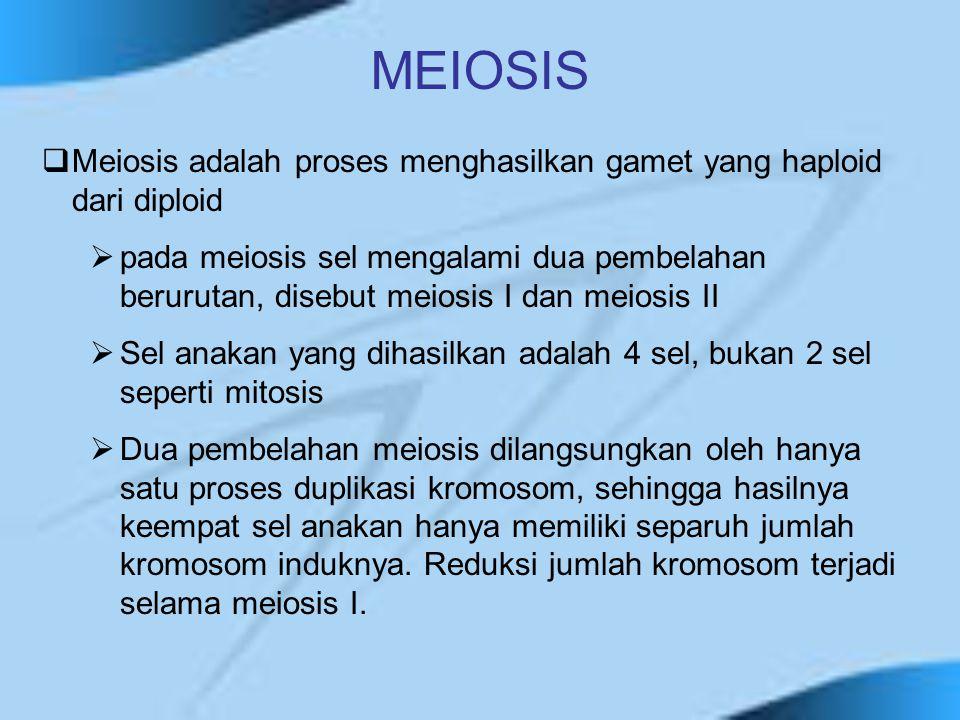  Meiosis adalah proses menghasilkan gamet yang haploid dari diploid  pada meiosis sel mengalami dua pembelahan berurutan, disebut meiosis I dan meio