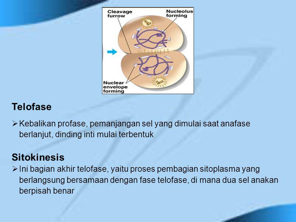 Telofase  Kebalikan profase, pemanjangan sel yang dimulai saat anafase berlanjut, dinding inti mulai terbentuk Sitokinesis  Ini bagian akhir telofas