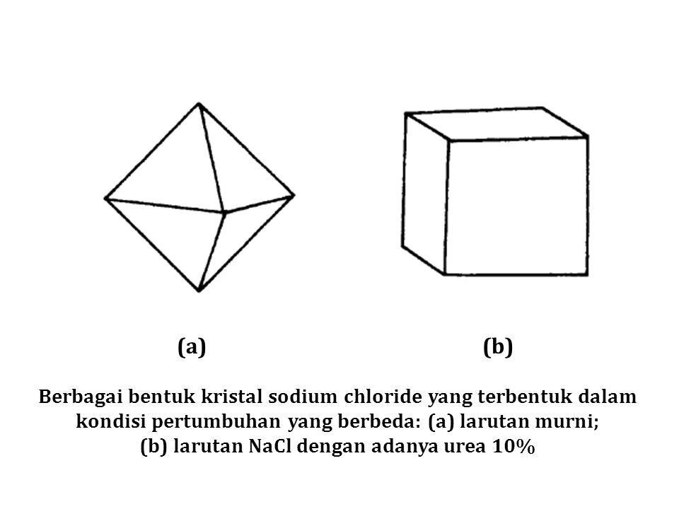(a)(b) Berbagai bentuk kristal sodium chloride yang terbentuk dalam kondisi pertumbuhan yang berbeda: (a) larutan murni; (b) larutan NaCl dengan adany