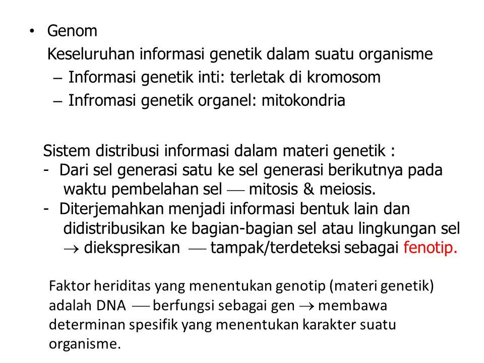 Genom Keseluruhan informasi genetik dalam suatu organisme – Informasi genetik inti: terletak di kromosom – Infromasi genetik organel: mitokondria Sist