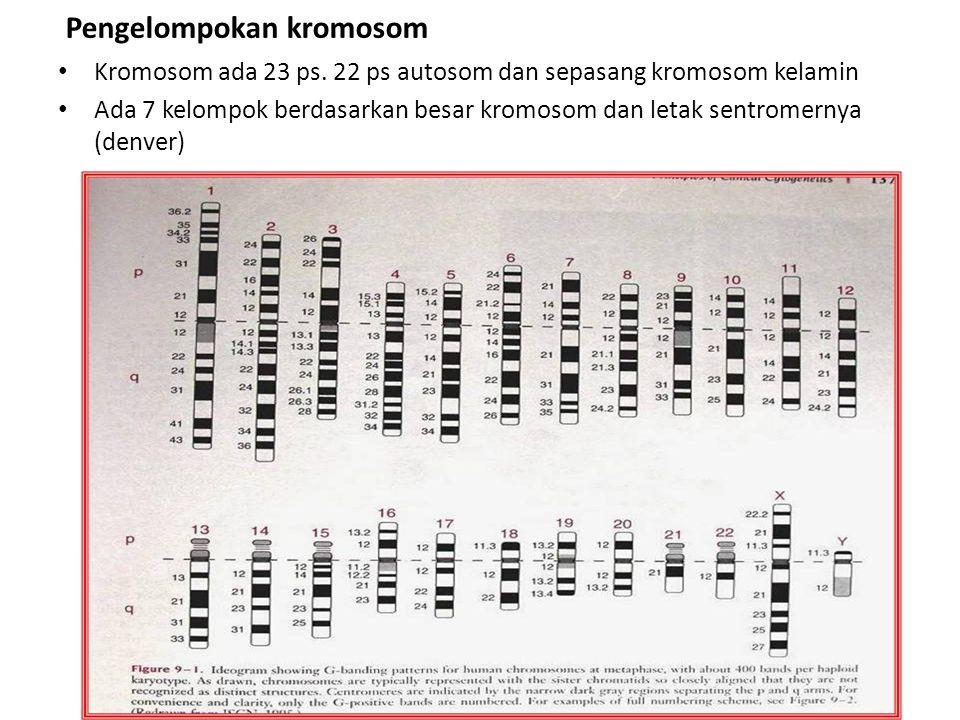 Pengelompokan kromosom Kromosom ada 23 ps. 22 ps autosom dan sepasang kromosom kelamin Ada 7 kelompok berdasarkan besar kromosom dan letak sentromerny