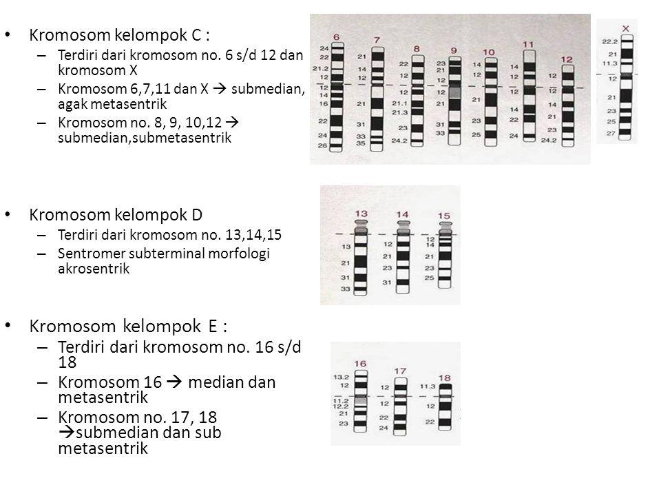 Kromosom kelompok C : – Terdiri dari kromosom no. 6 s/d 12 dan kromosom X – Kromosom 6,7,11 dan X  submedian, agak metasentrik – Kromosom no. 8, 9, 1